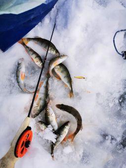 Рыбалка 2020, 11 января