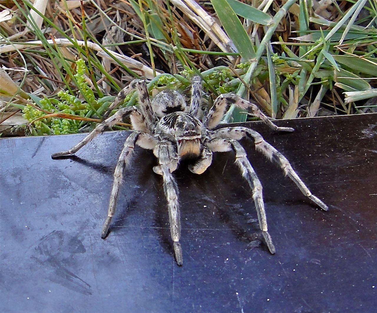 предлагает тарантул в казахстане фото новых