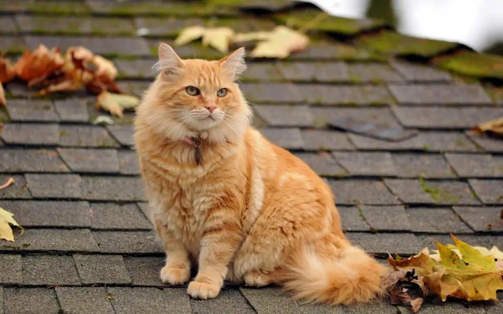 cat-2-14-990x619.jpg.jpg