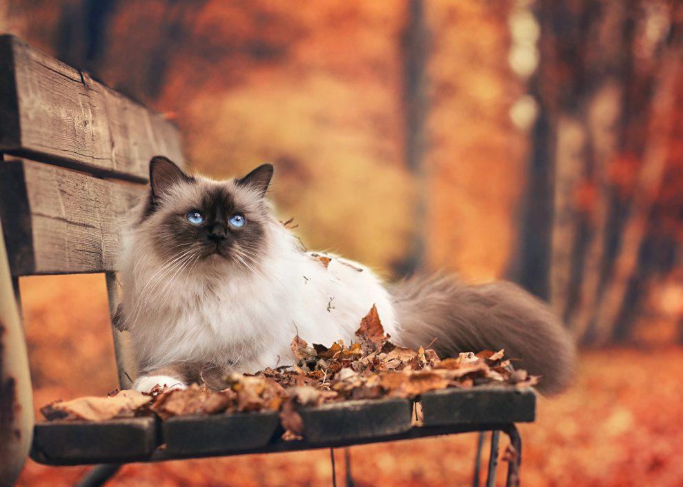 Cats_Autumn_Bench_503399-990x707.jpg